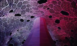【特別展示】 六甲山光のアート2014 Lightscape in Rokko オータムver. / 伏見雅之