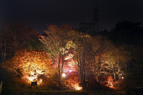 六甲高山植物園 紅葉ライトアップの様子