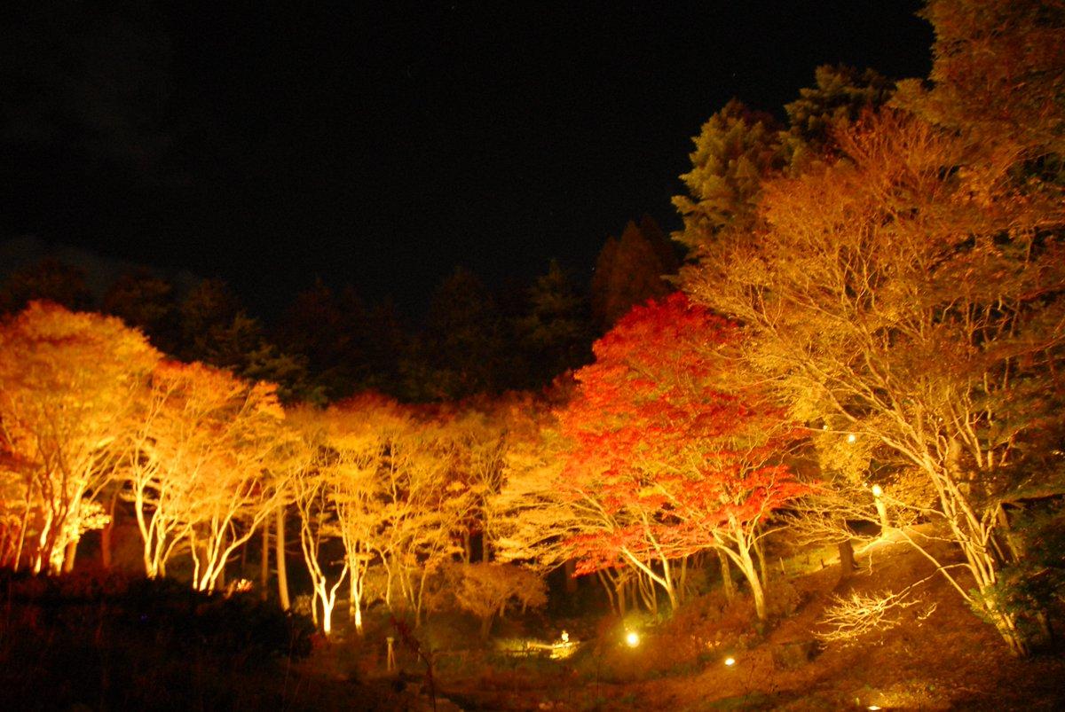 六甲高山植物园秋叶照亮