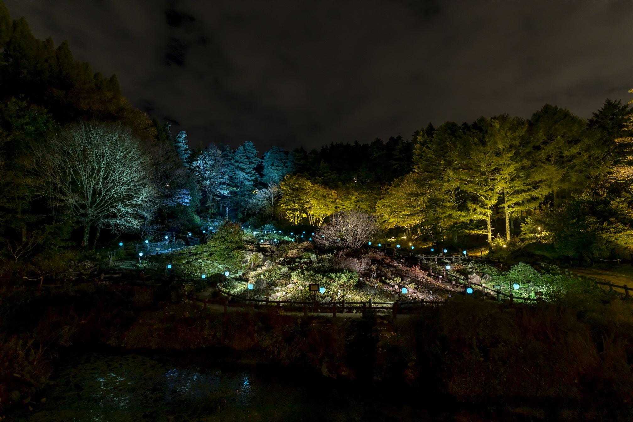 髙橋匡太「Glow with Night Garden Project in Rokko 提灯行列ランドスケープ」 六甲高山植物園