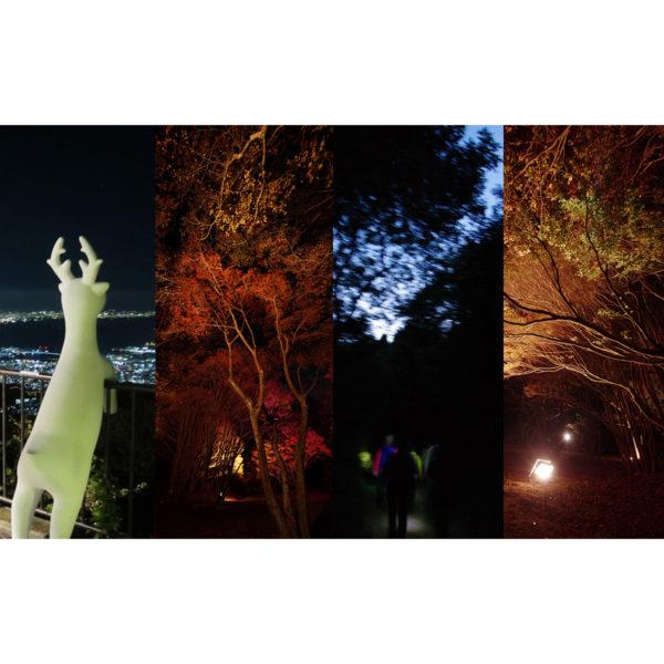 10/20(土)はナイトハイキング&植物園のライトアップ!