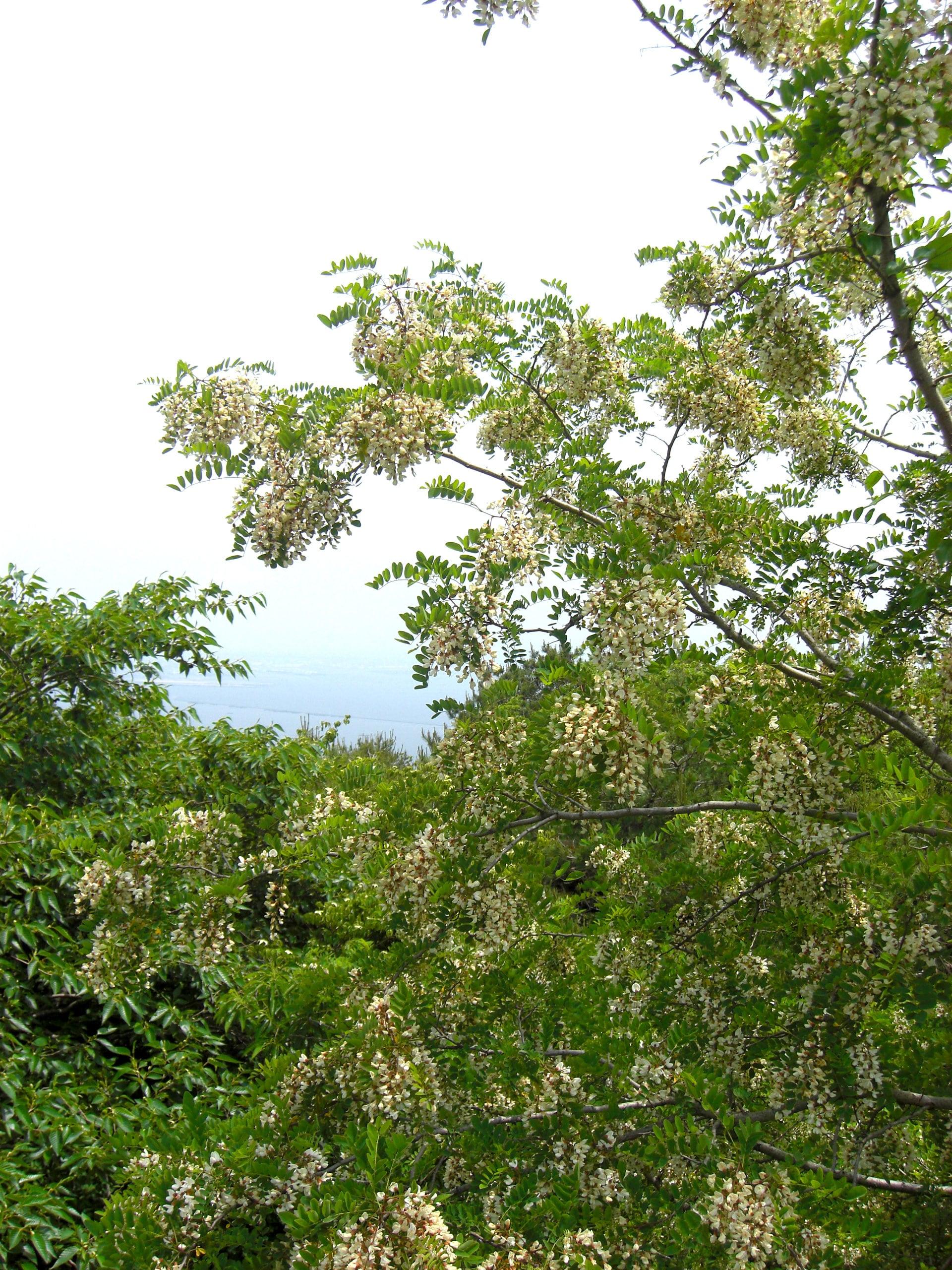 山の麓から山頂に渡る蜜源