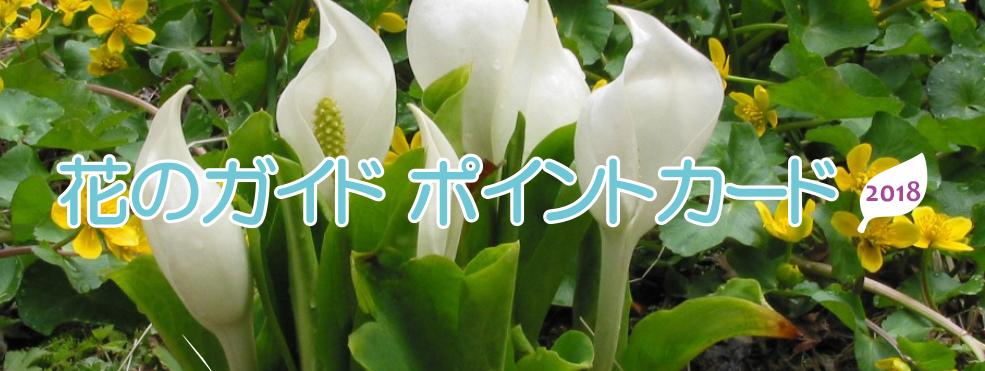 花のガイド ポイントカード