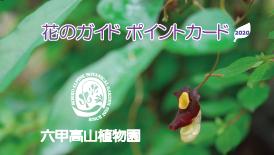 Carte de timbre (Amaeumasutsusa) _ol