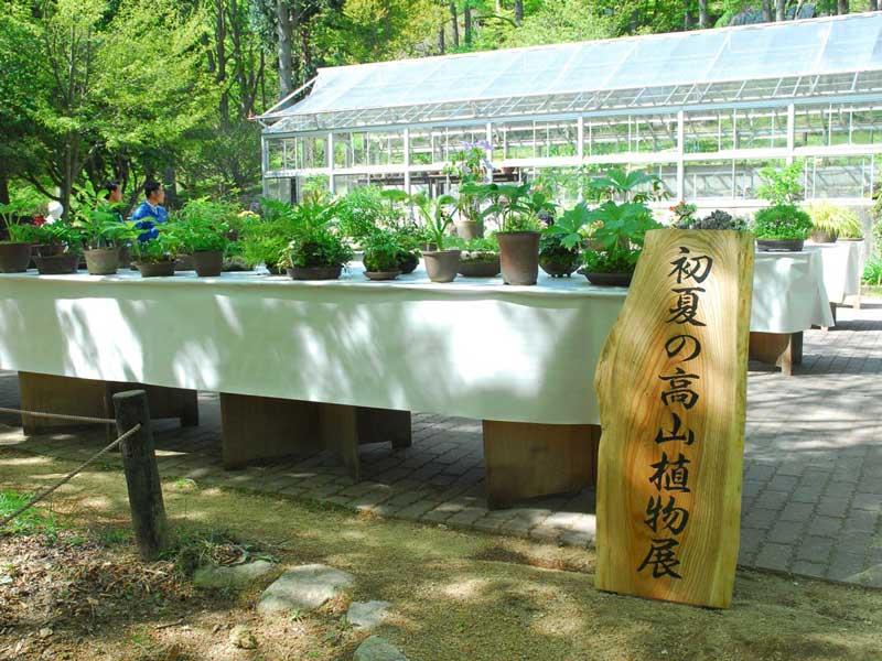 初夏の高山植物園展