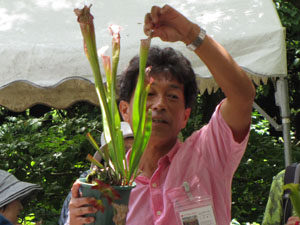 Group planting experience of carnivorous plants