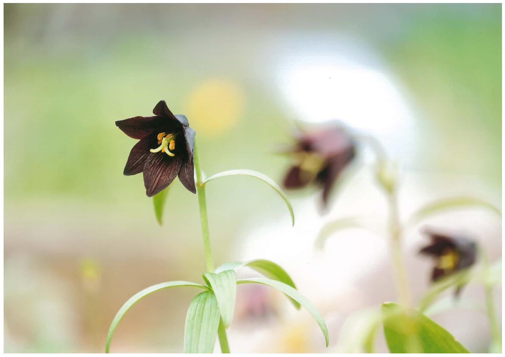 入賞「恋の花」浅野盛隆