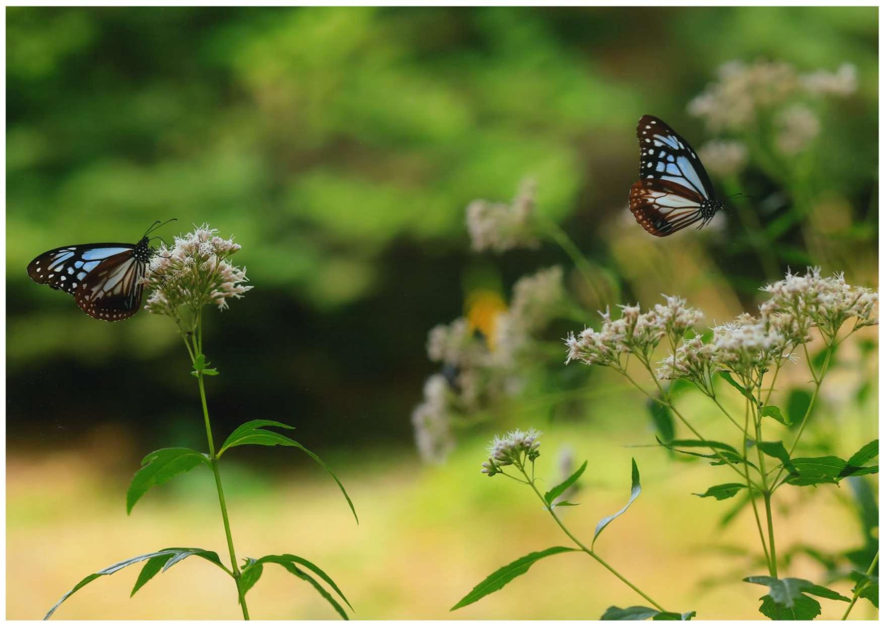 入賞「今年もこの花に」仙崎幸子_compressed_page-0001