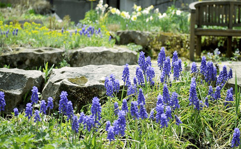 早春の球根と芽吹きの季節をお楽みください