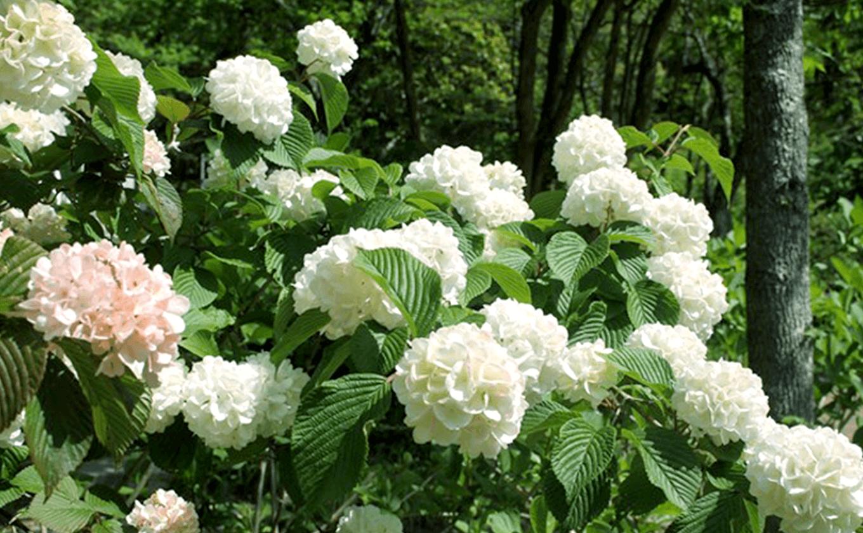 Một nơi thư giãn được bao quanh bởi Odemari và hoa hồng