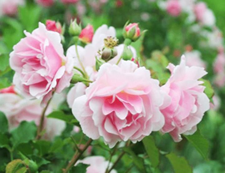 バラに囲まれるくつろぎの場所