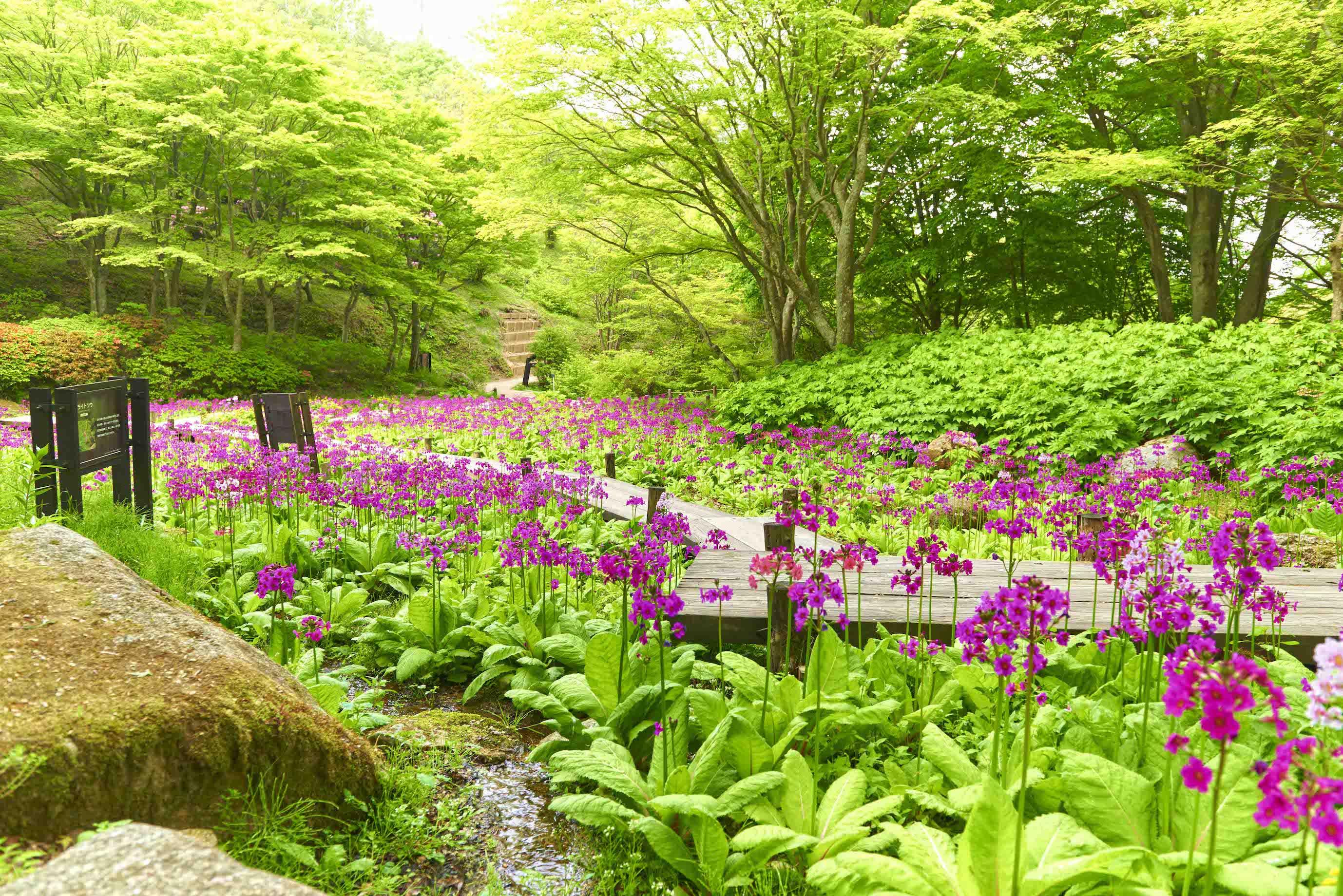 【開催見合わせ】毎日開催!花のガイド
