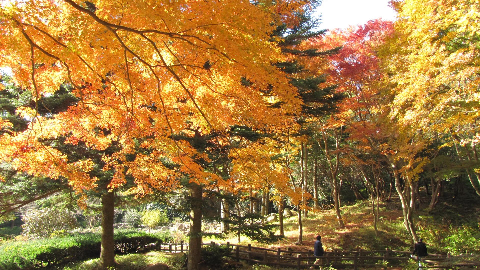 限定公開 安藤忠雄設計「風の教会」と「六甲高山植物園の紅葉」を楽しむバスツアー