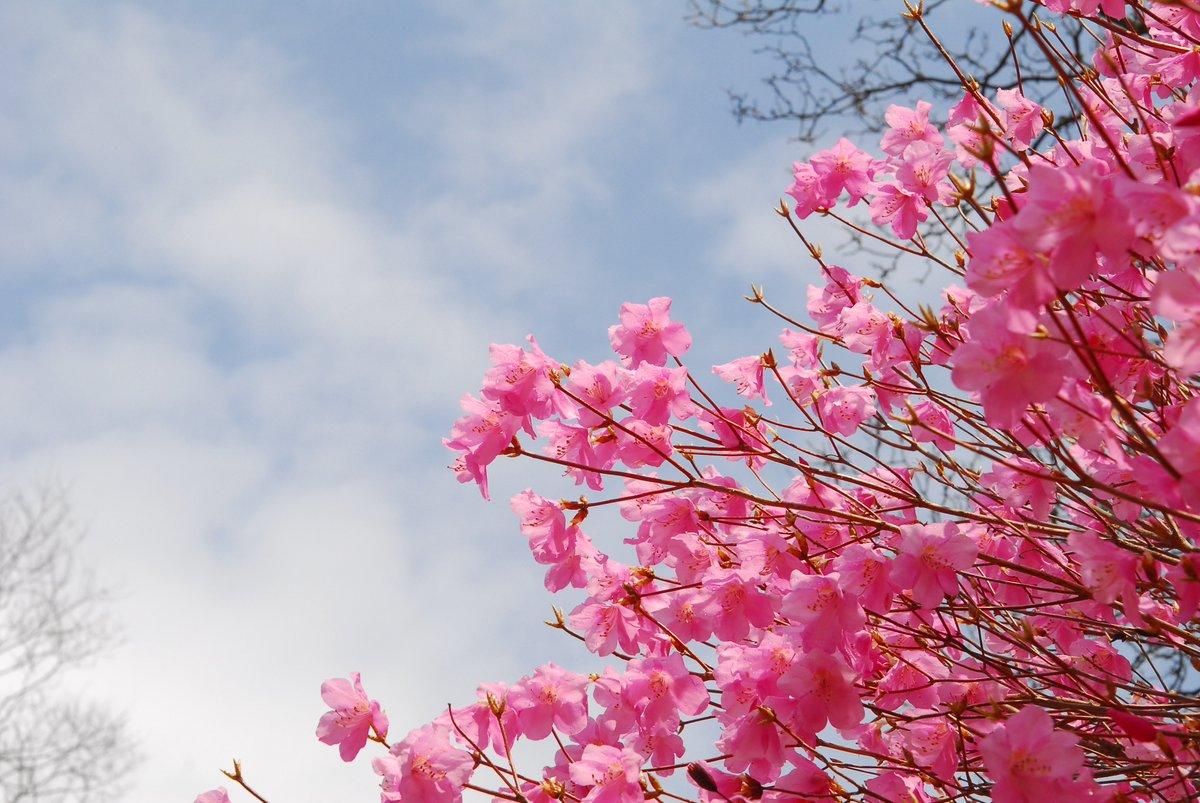 Cuộc biểu tình tem hoa mùa xuân
