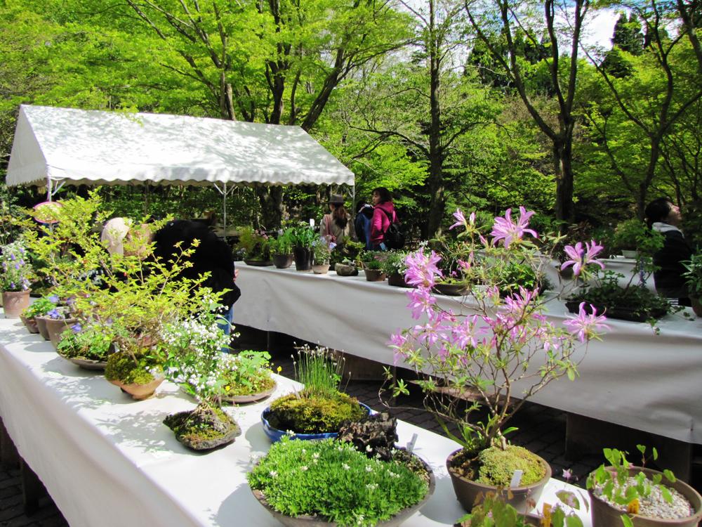 【中止】初夏の高山植物展