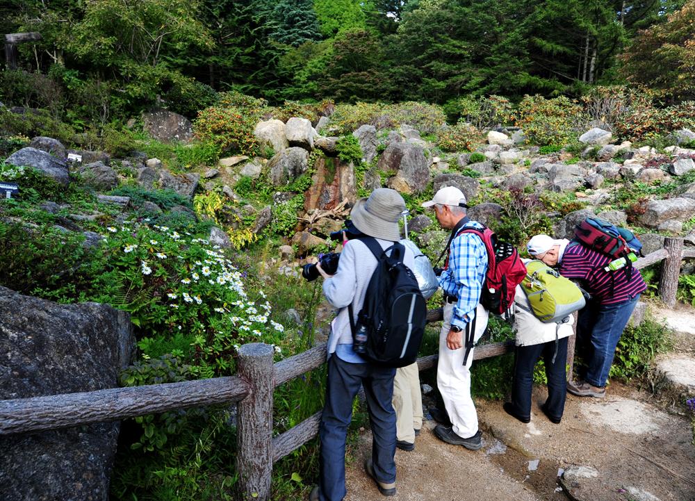 【予約受付中!】フォトセミナー「初夏の高山植物撮影会」